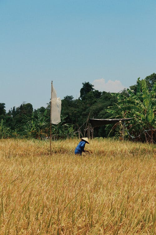 印尼, 巴厘島, 牧場, 田 的 免费素材照片