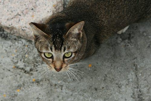 Ilmainen kuvapankkikuva tunnisteilla 1, Aasia, ei kukaan, eläin