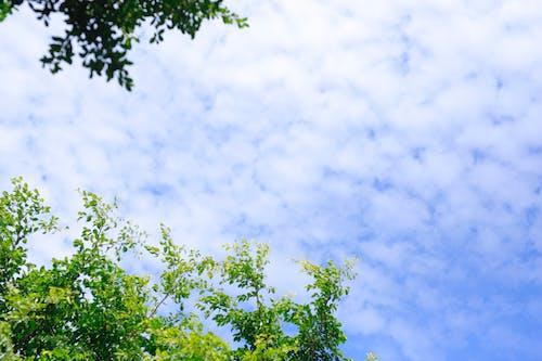 Бесплатное стоковое фото с голубое небо