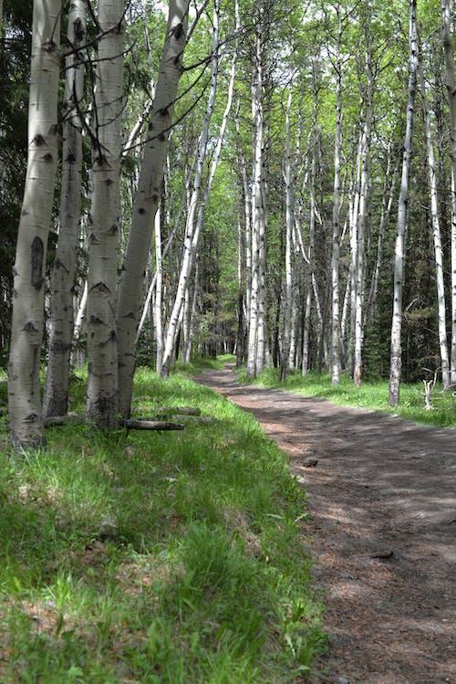 Imagine de stoc gratuită din cale, drumeție, pădure
