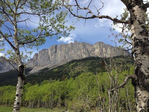 Imagine de stoc gratuită din Canada, Munții Stâncoși, șeful yamnuska