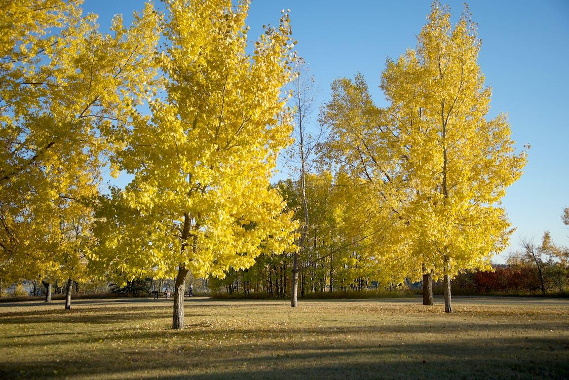 秋天的顏色, 秋葉
