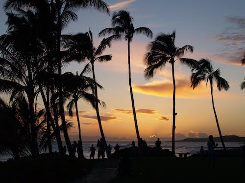 Imagine de stoc gratuită din frumos apus, plaja de soare