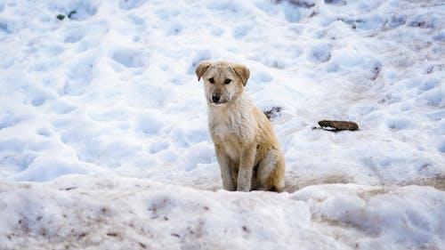 Fotos de stock gratuitas de Blog, cachorro, fondo de pantalla, frío