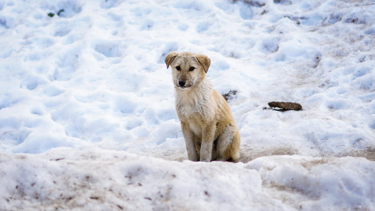 baby dog, blog, cold