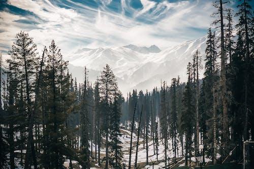 Fotos de stock gratuitas de al aire libre, arboles, frío, invierno