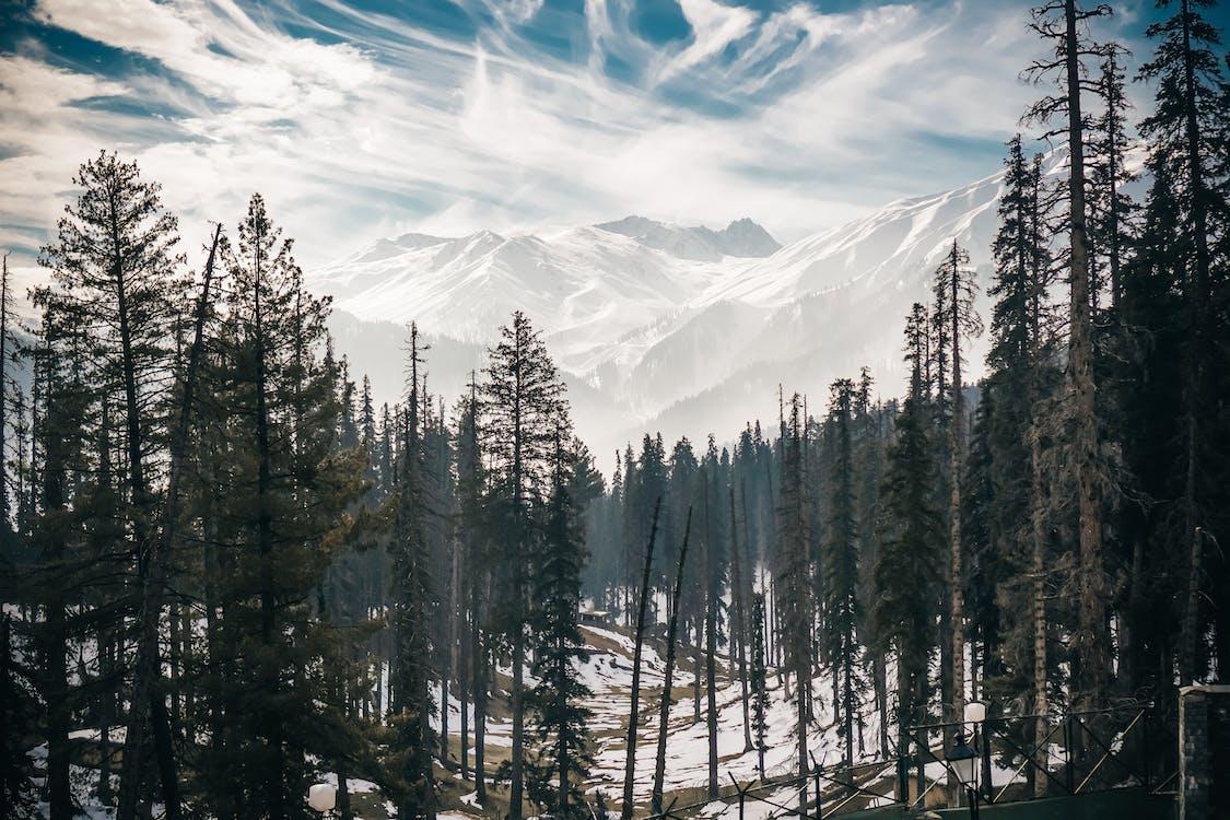 bergen, bomen, bossen