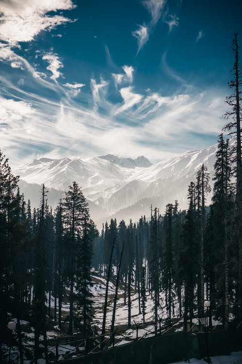 Pine Trees Under White Clouds With Mountain in Distance