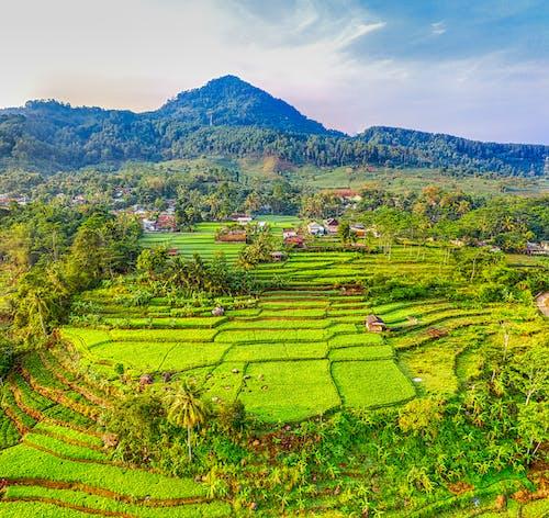 印尼, 增長, 天性, 日光 的 免費圖庫相片