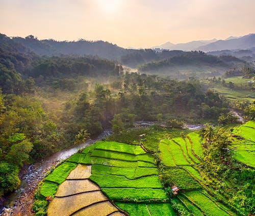 下田, 印尼, 原本, 增長 的 免費圖庫相片