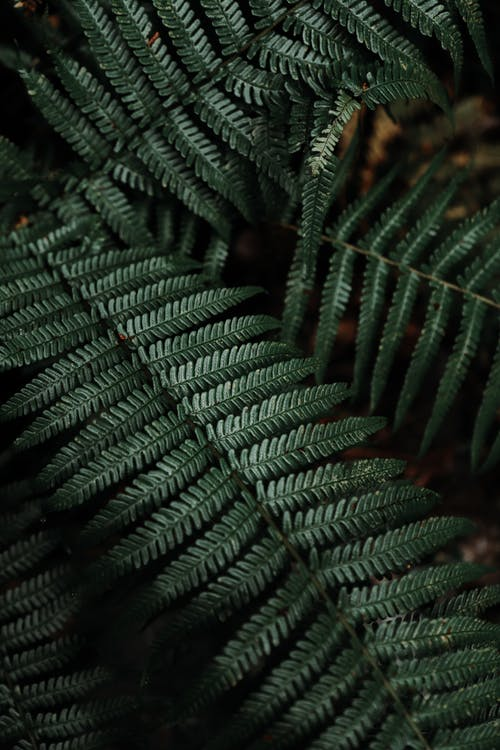 Dark Green Fern Plant