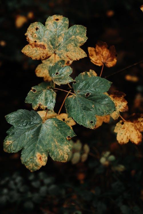 Základová fotografie zdarma na téma fotka zvysokého úhlu, listoví, listy, rostlina