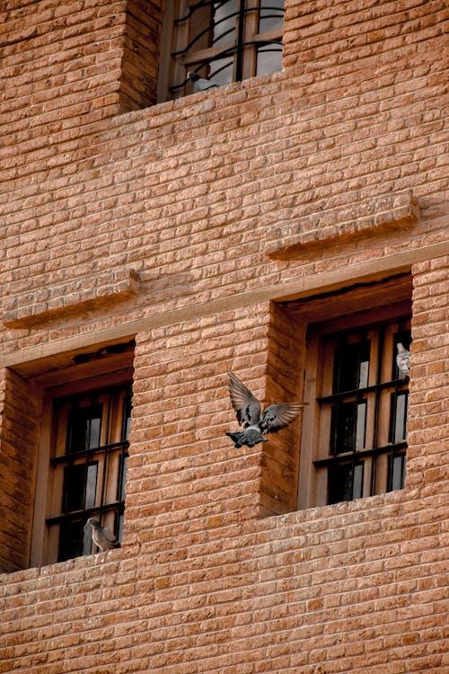 Foto d'estoc gratuïta de edifici de maons, مشاهدة الطيور, نوافذ زجاجية