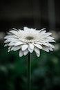 petals, plant, white