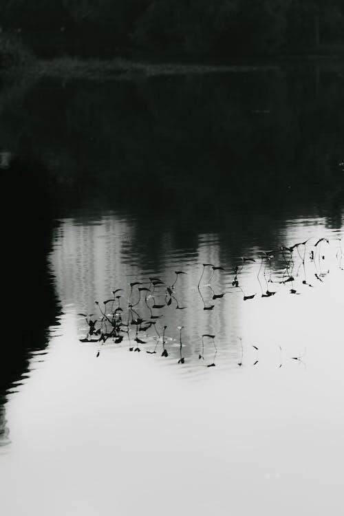 Бесплатное стоковое фото с вода, кувшинка, отражение