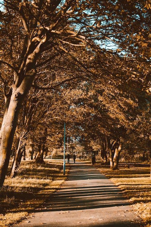 คลังภาพถ่ายฟรี ของ กลางแจ้ง, ตก, ต้นไม้, ทางเดิน