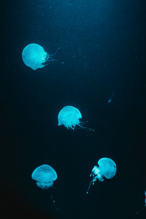 Four Blue Jellyfish