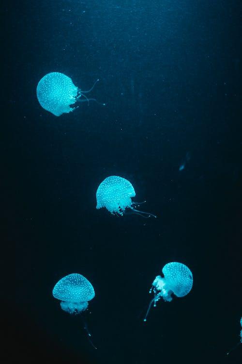 akvárium, barva, bezobratlí