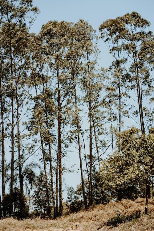 Fotobanka sbezplatnými fotkami na tému dedinský, denné svetlo, exteriéry, príroda
