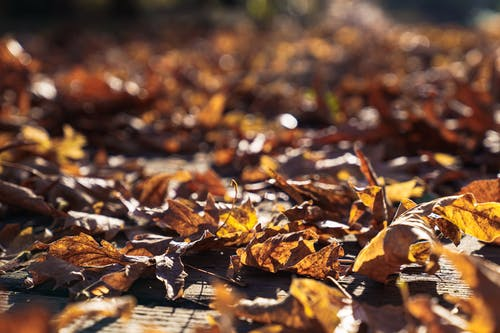 Free stock photo of autumn, colors of autumn, depth of field