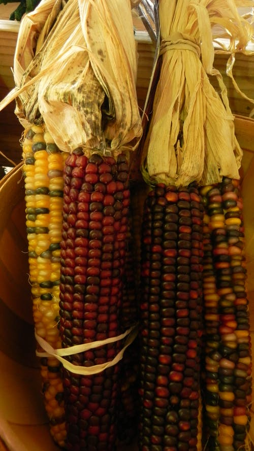 Foto d'estoc gratuïta de Agricultura, aventura, blat de moro, brillant