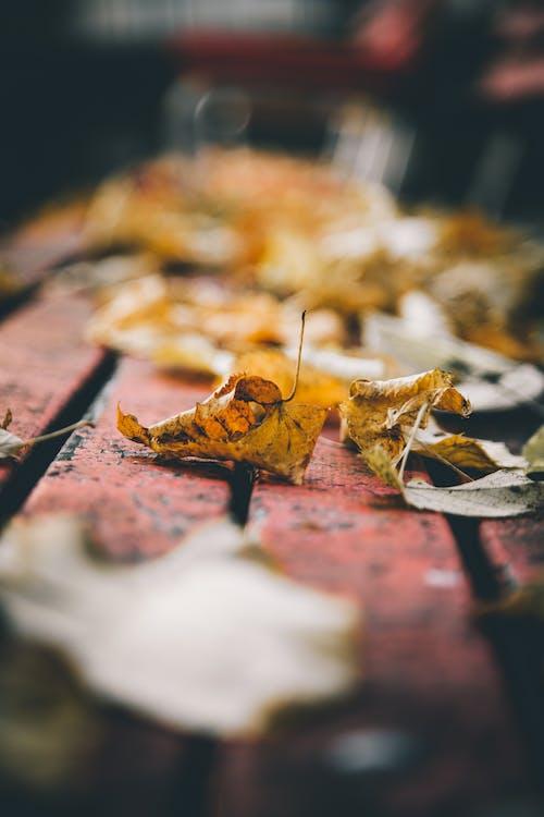 Darmowe zdjęcie z galerii z jesień, liście, listowie, pora roku