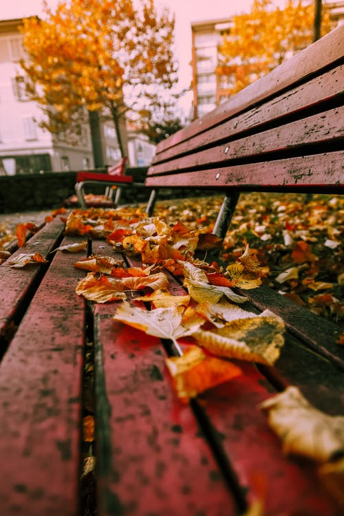 Gratis stockfoto met bank, bankje, bladeren, esdoornbladeren