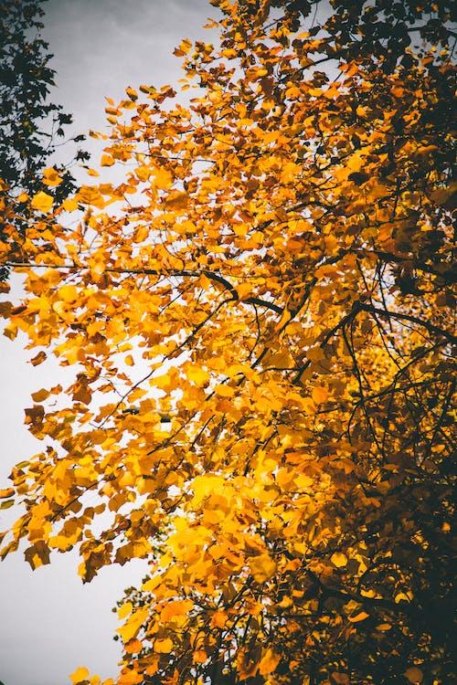 årstid, blader, brun