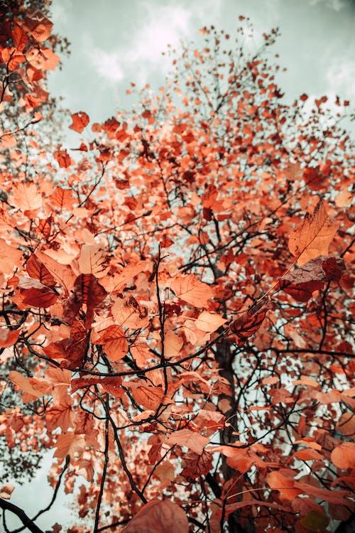 Δωρεάν στοκ φωτογραφιών με δέντρο, εποχή, καφέ, κλαδιά
