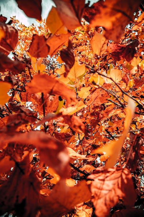 Foto stok gratis Daun-daun, jatuh, kilang, musim