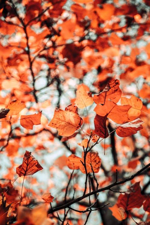Gratis arkivbilde med årstid, blader, brun, dybdeskarphet