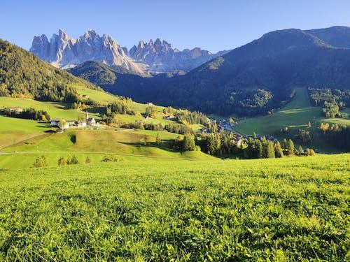 Imagine de stoc gratuită din agricultură, arbori, călătorie, câmp