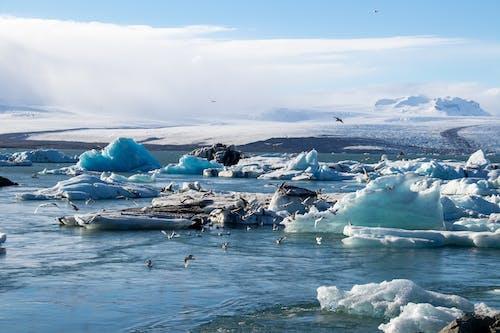Foto d'estoc gratuïta de a l'aire lliure, canvi climàtic, constipat, fonent-se