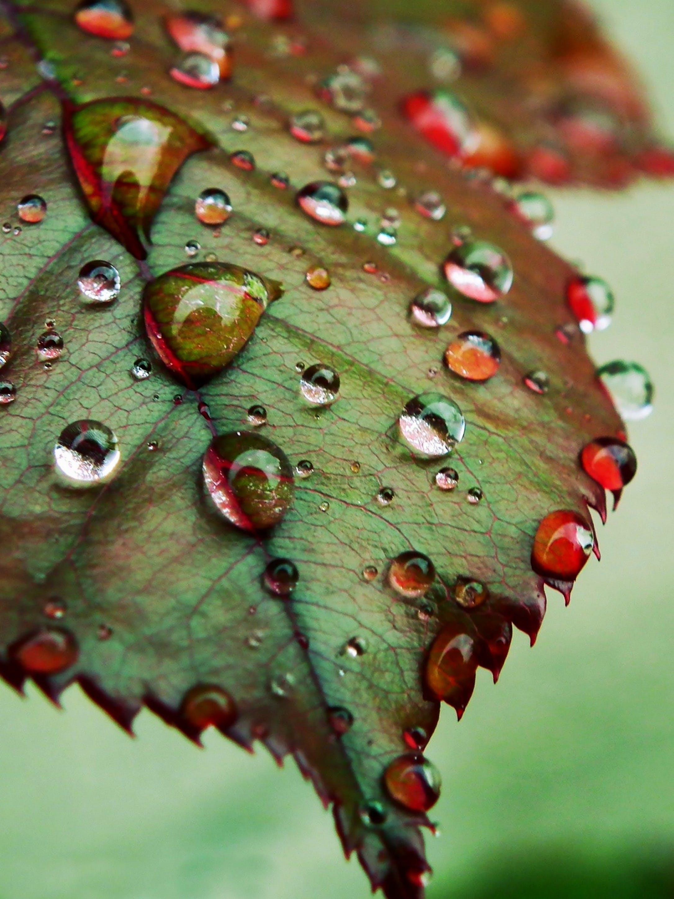 Free stock photo of nature, water, winter, rain