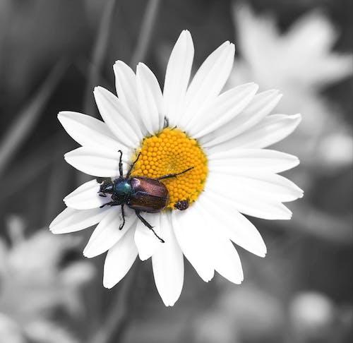 Immagine gratuita di bianco, colore selettivo, giallo, macro