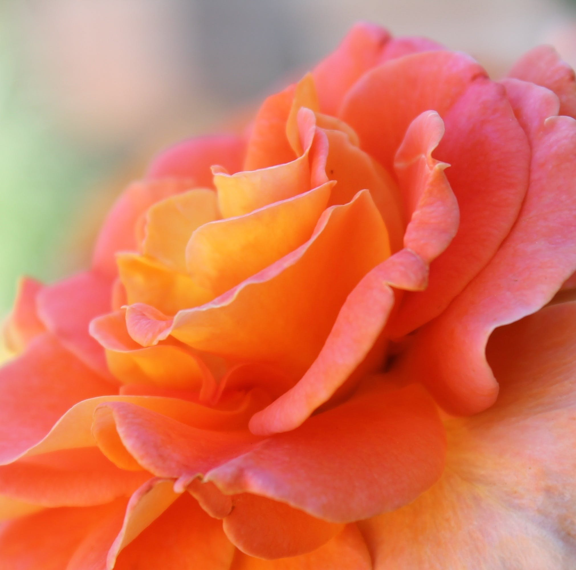 Free stock photo of nature, romantic, texture, garden