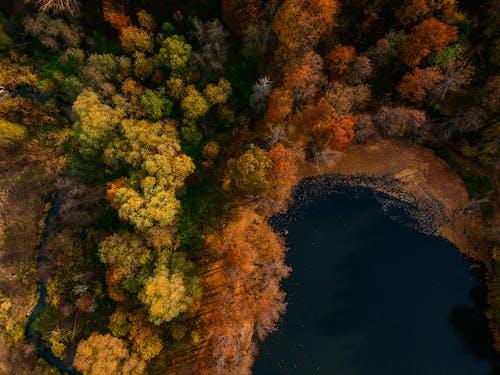 Photos gratuites de arbres, automne, eau, forêt automne