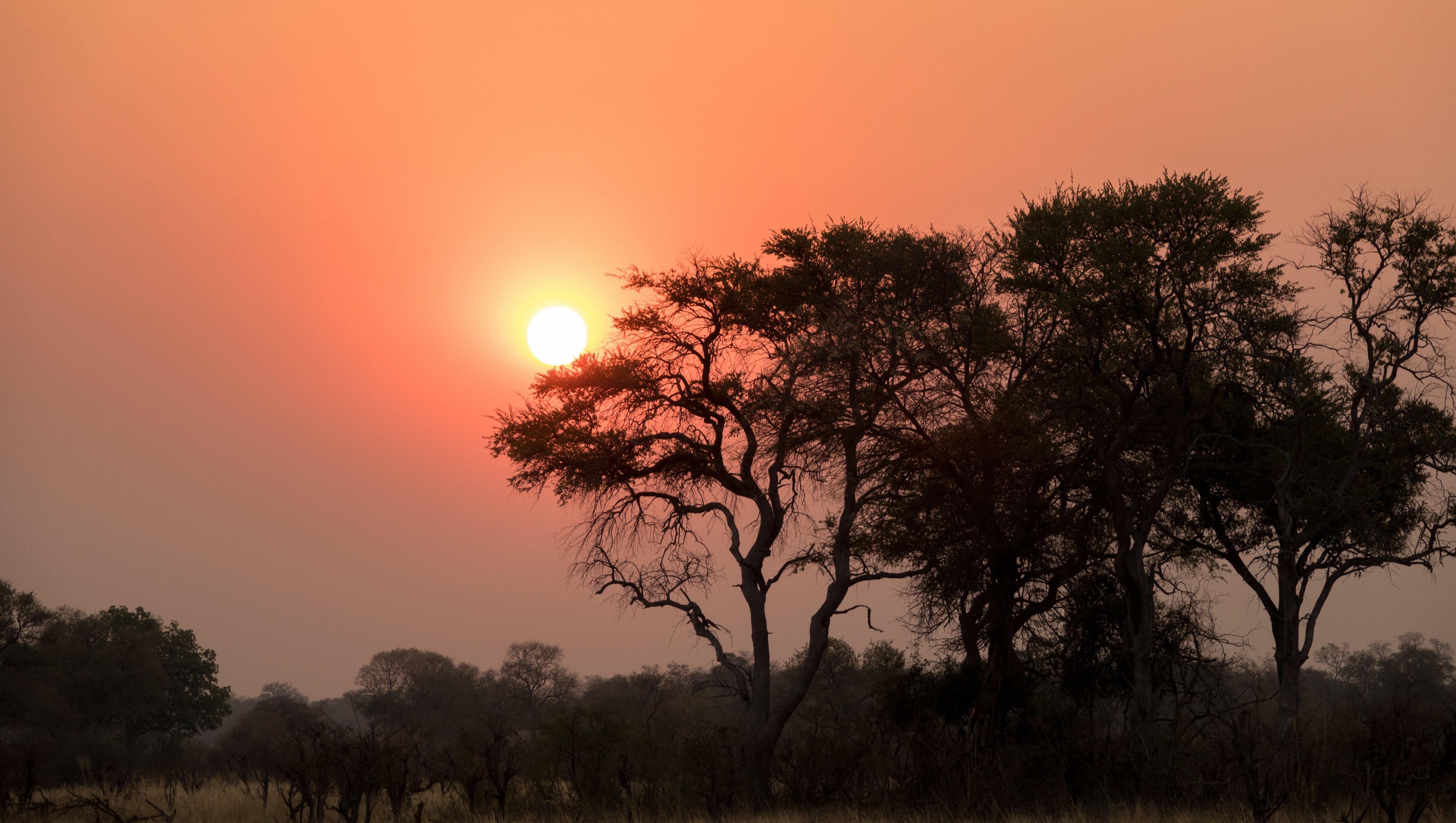 Free stock photo of sunset, africa, botswana, afterglow