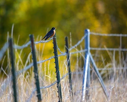 Imagine de stoc gratuită din cădere, gard, pasăre