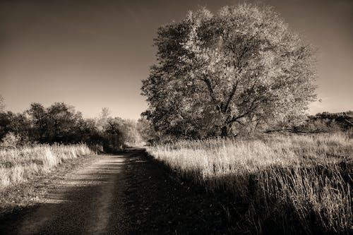 Imagine de stoc gratuită din alb-negru, arbore