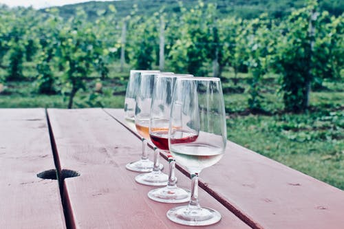 Foto d'estoc gratuïta de tast de vi, vi, vinya