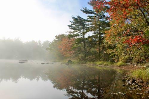 Foto d'estoc gratuïta de boira, colors de tardor, llac, primera hora del matí