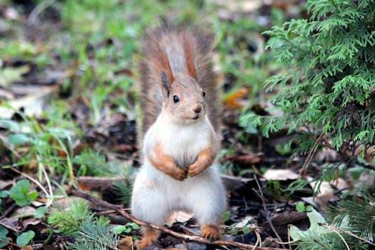 squirrel pictures pexels free stock photos