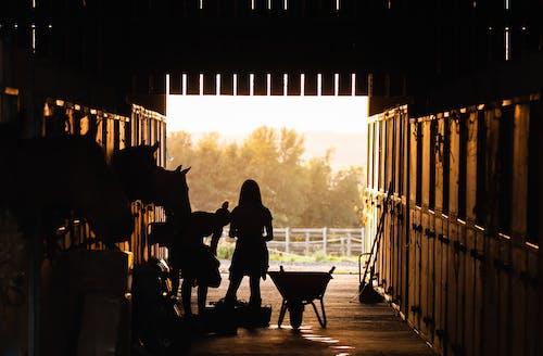 คลังภาพถ่ายฟรี ของ กลางแจ้ง, กั้นรั้ว, การให้อาหาร, คอกม้า