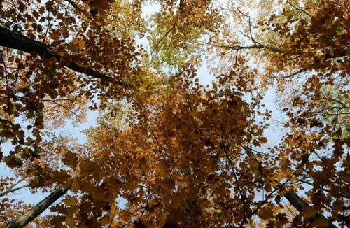 Low Angle Photo of Brown Leafed Trees