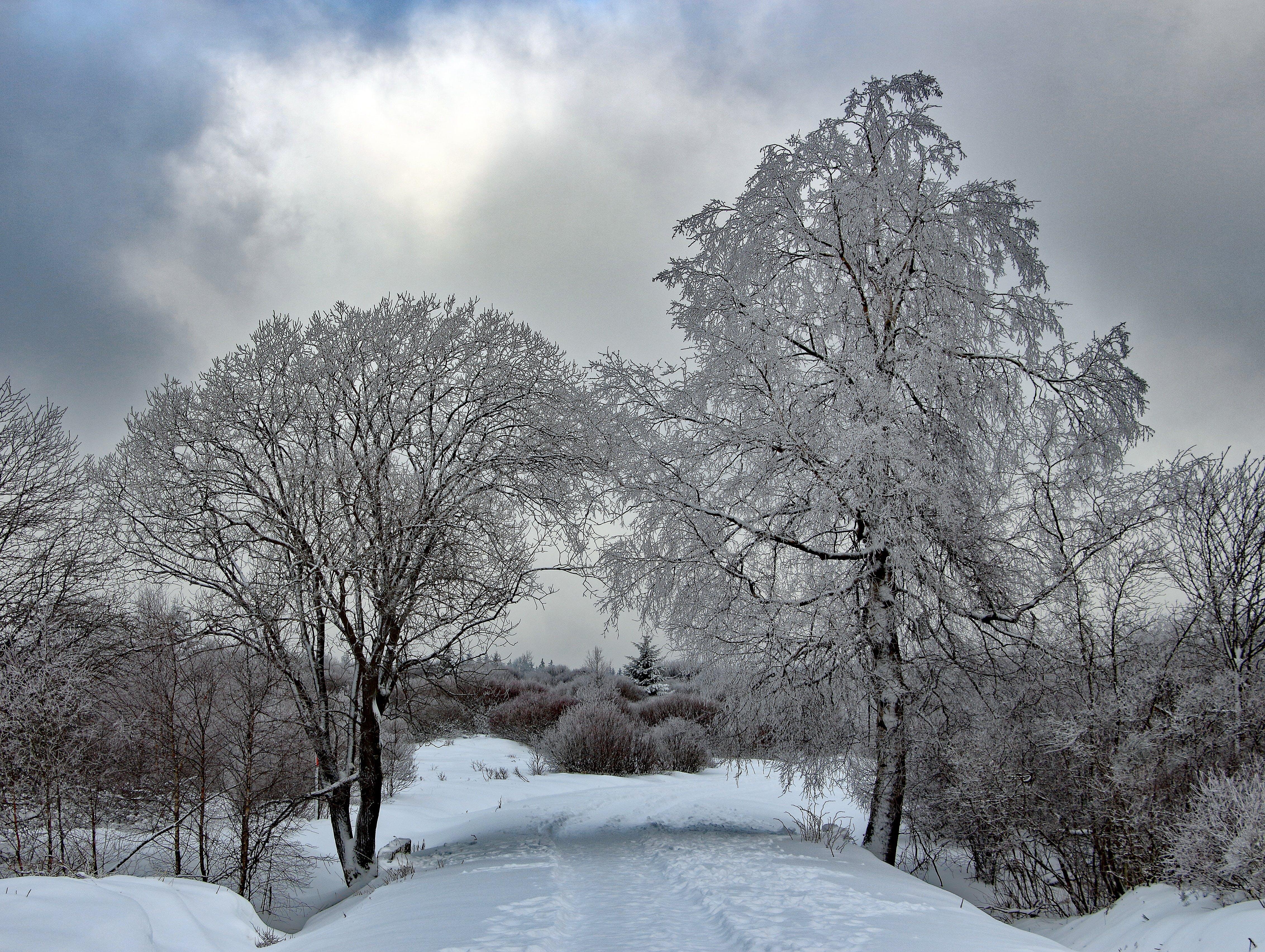 Free stock photo of back light, eifel, forest, high veen