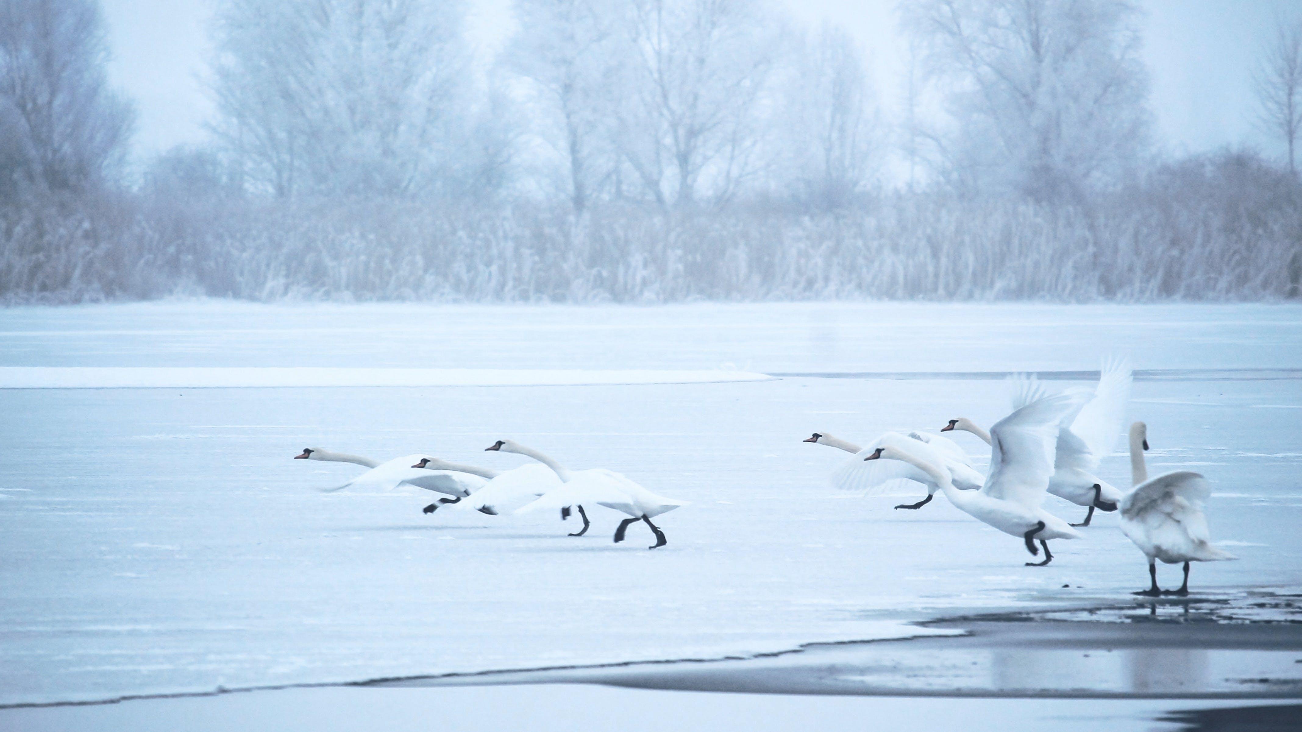Free stock photo of cold, dawn, landscape, winter