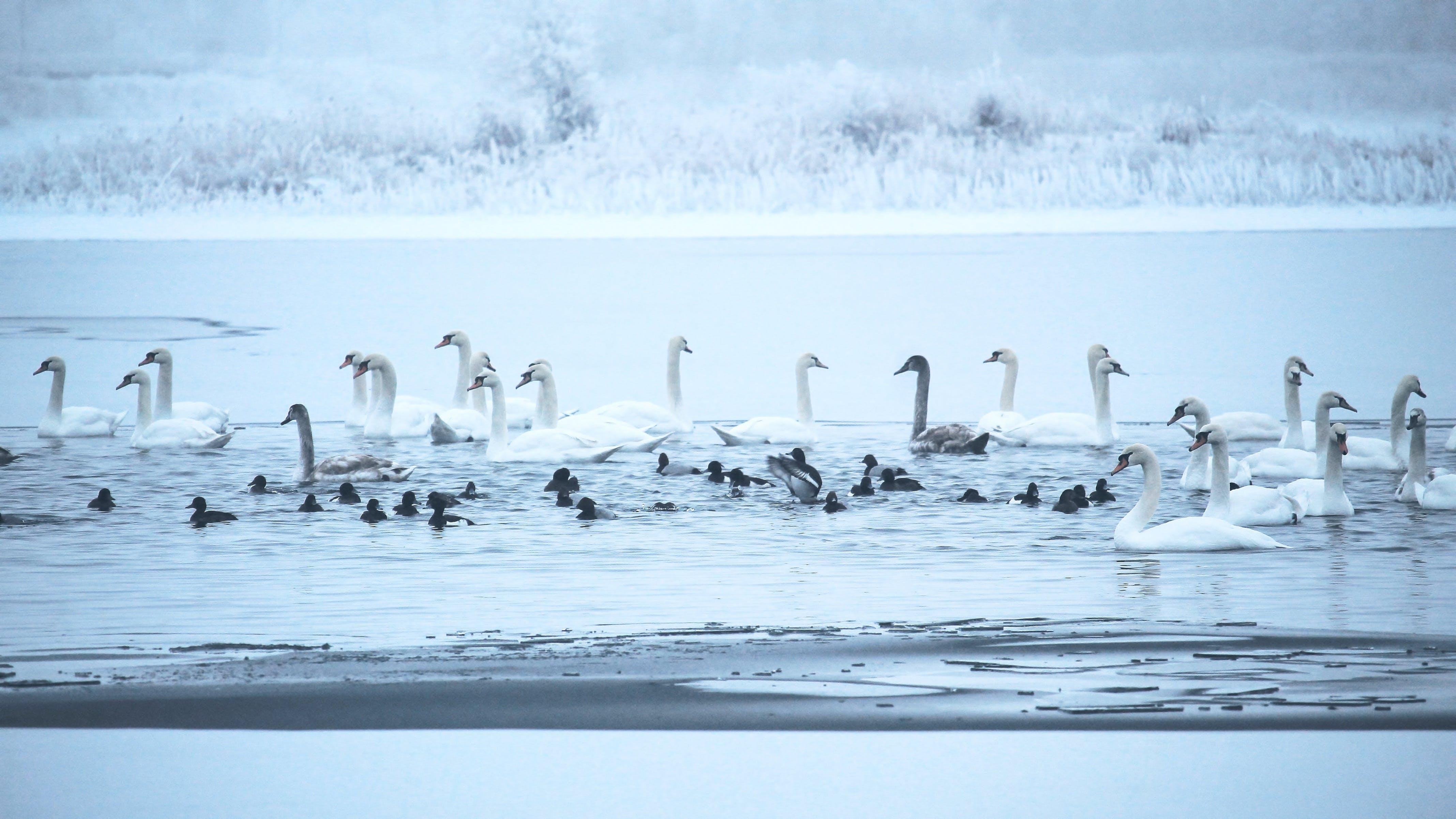 Free stock photo of cold, dawn, elbaue, frozen