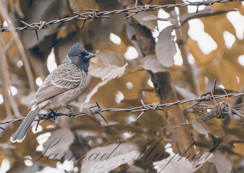 Immagine gratuita di all'aperto, fotografia della natura, fotografia di animali, selvaggio