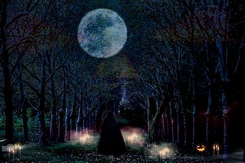 Ingyenes stockfotó csupasz fa, gyertya, halloween, hold témában